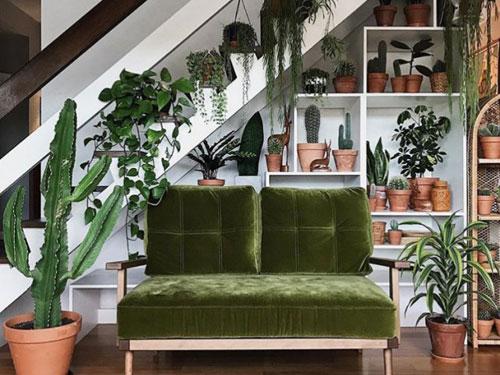Divano in velluto verde con scaffale alle spalle pieno di cactus e piante grasse